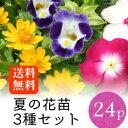 ★★夏の花苗 3種アソートセット 花苗 24ポット