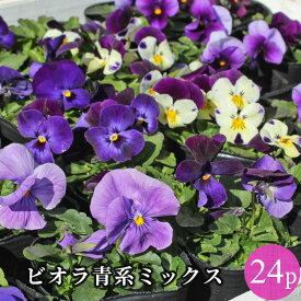 ビオラ 青系品種アソート 花苗 24ポットセット