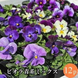 ビオラ 青系品種アソート 花苗 12ポットセット[冬一年草]