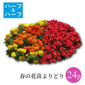 【ポイント3倍】春の花苗24ポット ハーフ&ハーフよりどり選べるセット[春一年草]