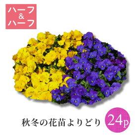 秋冬の花苗24ポット ハーフ&ハーフよりどり選べるセット
