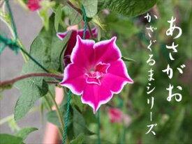 【セール】変わりあさがお かざぐるまシリーズ 3.5号