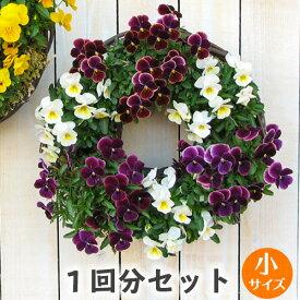 [1回分]小サイズ リース セット 花苗で作る ハンギングリース 壁掛け 鉢 母の日(カゴ小1+水苔+専用土が1回分)