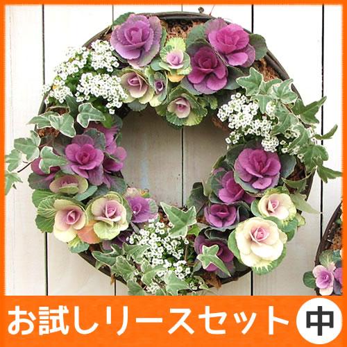 なごみ【お試し 中リース セット】花苗で作る ハンギングリース