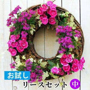 [お試し] 中 リース セット 花苗で作る なごみ ハンギングリース 壁掛け 鉢 福袋(お花以外材料が揃った自宅で園芸教室・簡単制作セット) 寄せ植え向き