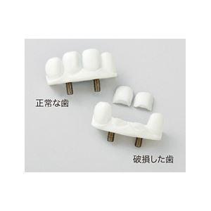 サカモト気道管理トレーナー(看護実習モデル人形)交換用前歯】収納ケース付きM-167-0【代引不可】