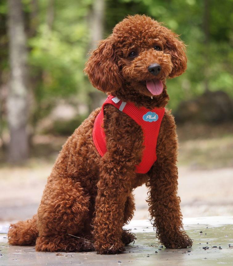 スイスの高級ドッグブランド【Curli】 ベストエアメッシュハーネス【VEST AIR MESH HARNESS】 小〜中型犬用サイズ