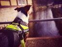 【送料無料】【Julius-K9】【メッシュタイプ】ユリウスケーナイン・IDCパワーサマーハーネス 小・中型犬サイズ