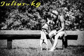 【送料無料】世界25カ国以上で愛されている機能性抜群ハーネス【Julius-K9】ユリウスケーナイン・IDCパワーハーネス Size0〜3 中・大型犬用サイズ