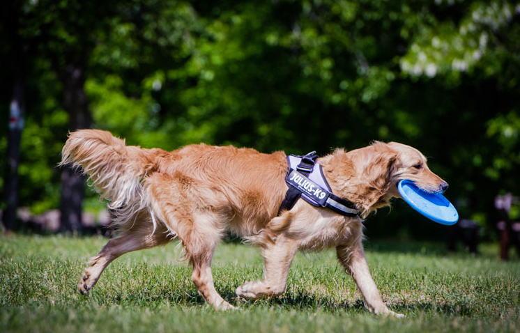 【送料無料】世界25カ国以上で愛されている機能性抜群ハーネス【Julius-K9】ユリウスケーナイン・IDCパワーハーネス Miniサイズ 小・中型犬用サイズ