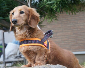It fits your dog! Nylon soft T-harness