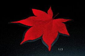 ミニクリアシート 赤もみじ(200枚入) 型抜きクリアシート キッチン 日本製 料理演出 和食料理 飲食店 ホテル 旅館