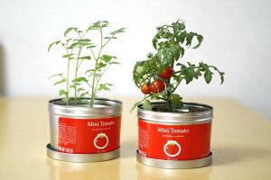 栽培セット リトルガーデンプロ ミニトマト 園芸 ガーデニング インテリア ギフト 室内 かわいい 栽培キット
