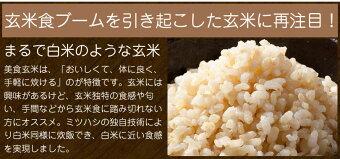 ミツハシ美食玄米900g×5本【送料無料】