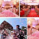 業務用サイズ フラワーシャワー  約1キロ 約10000枚  結婚式 歓迎会 送迎会 イベント パーティー お祝い …