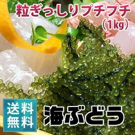 朝どり新鮮!生海ぶどう(1kg)【送料無料】|沖縄 宮古島産 居酒屋 小料理 おつまみに♪