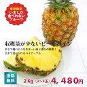 朝取り ピーチパイン2kg(3〜4玉)【送料無料】もぎたて!パイナップル 【沖縄 宮古島 国産】【フルーツ】