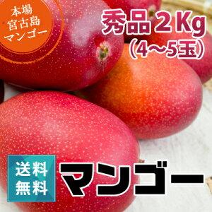 秀品マンゴー1kg(4〜5玉)朝獲りもぎたて沖縄県宮古島産マンゴーの収穫量日本一の宮古島より直送予約販売中6月下旬より順次発送