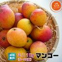 ミニマンゴー1kg(5玉〜20玉)朝獲りもぎたて 沖縄県宮古島産 マンゴーの収穫量日本一の宮古島より直送 予約販売中6月下旬より順次…