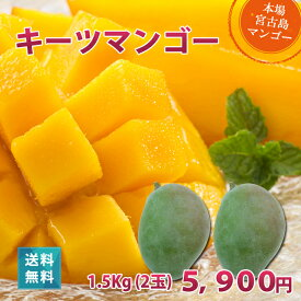 キーツマンゴー1.5kg(2玉)朝獲りもぎたて 沖縄 宮古島産 マンゴーの収穫量日本一の宮古島より直送【8月上旬より順次発送】