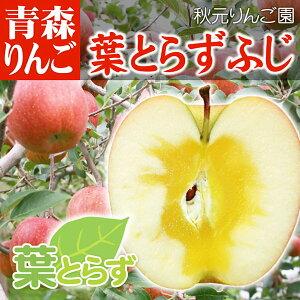 青森 リンゴ 葉とらず サンふじ ●家庭用 3C箱(3kg箱:約9〜15個入)【りんご 青森県産 蜜入りリンゴ 蜜入りりんご 訳あり 葉取らず 林檎 りんごジュースに ギフト 御歳暮 お歳暮 お試し フルーツ