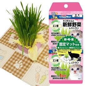 ネコちゃんの新鮮野菜レストラン 2P(41480) 猫草栽培セット ねこ草 燕麦 エン麦