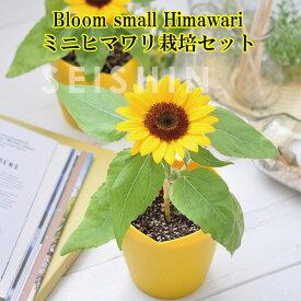 『栽培セット』 Bloom small Himawari ミニヒマワリ栽培セット 【即納】 栽培キット 植物 グリーン ハーブ 野菜 ひまわり ヒマワリ 向日葵 かわいい 可愛い インテリア 置物 グッズ