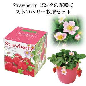 栽培セット Strawberry ピンクの花咲く ストロベリー 栽培キット 【即納】 栽培 セット キット イチゴ いちご 苺 果物 フルーツ 野菜 インテリア 置物 グッズ