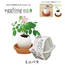 栽培キット eggling eco friendly エッグリング エコフレンドリー ミニバラ 【即納】 栽培セット 植物 グリーン バラ …