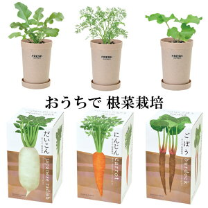栽培キットおうちで根菜栽培
