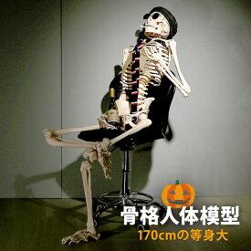 【 ハロウィン 飾り 骸骨 】 人体模型 骨格模型 7ウェルネ 全身骨格 模型 等身大 [ 間接模型 骨格標本 骨模型 骸骨模型 人骨模型 骨格 人体 モデル ヒューマンスカル 骸骨 ガイコツ 可動 靭帯 全身模型 教材 実験 接骨院 整骨院 ][ E-5-5 ]