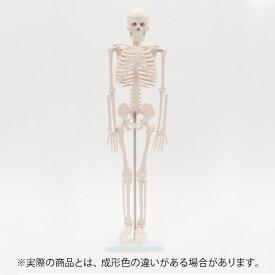 【 ハロウィン 飾り 骸骨 】 人体模型 骨格模型 7ウェルネ 全身骨格 模型 1/2サイズ 高さ85cm [ 間接模型 骨格標本 骨模型 骸骨模型 人骨模型 骨格 人体 モデル ヒューマンスカル 骸骨 ガイコツ 可動 靭帯 全身模型 教材 実験 接骨院 整骨院 ][ E-5-5 ]