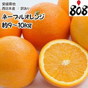 【送料無料】【西日本産】訳あり ネーブルオレンジ 大きさおまかせ 風袋込 約9〜10kg(北海道沖縄別途送料加算)木成り完熟/訳有/訳あり/訳アリ/ワケあり/ジュース/スムージー/オレンジ/