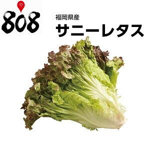 【福岡県産】サニーレタス 1...