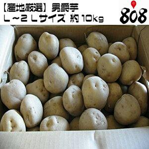 【送料無料】【産地厳選】男爵芋 L〜2Lサイズ  1箱 約10kg(北海道沖縄別途送料加算)男爵いも/だんしゃくいも/じゃがいも/ジャガイモ/じゃが芋/ジャガ芋/ばれいしょ/きたあかり/とうや/ポ