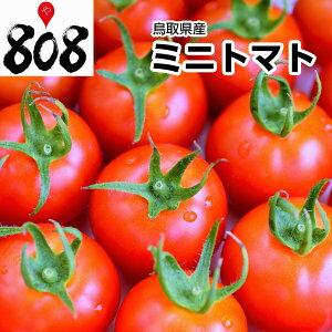 【西日本産】ミニトマト 1パック 約200g【野菜詰め合わせセットと同梱で送料無料】【送料別】とまと/トマトジュース/トマトケチャップ/トマトソース/トマトリコピン/トマトダイエット/