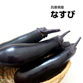 【西日本産】なすび 1パック 約300g【野菜詰め合わせセットと同梱で送料無料】【送料別】