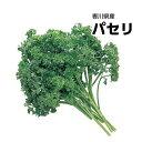 【西日本産】パセリ 1パック 約200g【野菜詰め合わせセットと同梱で送料無料】【送料別】