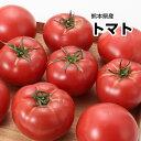 【西日本産】超ビッグサイズ トマト 1箱 3Lサイズ 12〜14玉入【送料別】とまと/トマトジュース/トマトケチャップ/…