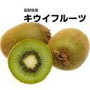 【長野県産】訳あり キウイフルーツ 大きさおまかせ 約1kg【3点以上ご購入でプラス1kg】【送料別】【2点以上ご購入で…