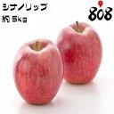 【送料無料】【長野県産】家庭用 シナノリップ 大きさおまかせ 約5kg(北海道沖縄別途送料加算)夏りんご/アップル/リンゴ/りんご/林…