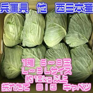 【送料無料】【西日本産】訳あり 採れたて大玉キャベツ L〜3Lサイズ 約10kg以上 (北海道沖縄別途送料加算)