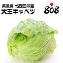 【西日本産】訳あり 採れたて大玉キャベツ L〜3Lサイズ 約10kg以上 【常温便送料無料】(北海道沖縄別途送料加算)訳…