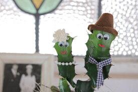 《プレゼントに》限定・癒しの笑顔シリーズ 仲良しサボテンズ Sサイズ円満 嬉しい 楽しい 感謝 ありがとう おしゃれ 観葉植物 めずらしい 他にはない かわいい カクタス 祝 夫婦円満 笑顔 育てやすい 多肉植物 顔 ダイウンカク ユーフォルビア 花 おもしろギフト