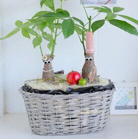 夏《敬老の日ギフトにも》癒しの笑顔シリーズ《アダムとイヴの仲良しパキラ》リンゴ.アップル.おしゃれ.育てやすくてかわいい観葉植物・他にはないインテリアグリーン・円満・成長を楽しむ室内用植物・変わった植物・贈り物・ギフト・楽しい・嬉しい・喜ばれる・ありがとう