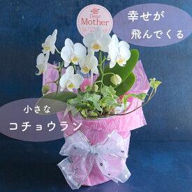 《母の日のプレゼント》幸せが飛んでくる 必ず喜ばれる ミニコチョウラン 二本立ち 白 胡蝶蘭 ファレ 2F 花贈り 高貴 エレガント 花鉢 長持ち 毎年咲く 高級な花 コンパクト 飾りやすい 育てやすい かわいい ピンク ラッピングサービス メッセージカード無料 フラワー