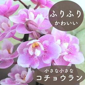 《母の日のプレゼント》マイクロミニコチョウラン ダイヤモンドサクラ 幸せが飛んでくる 2本立ち ピンク 胡蝶蘭 ファレ 2F 花贈り フリル 花鉢 長持ち 毎年咲く 高級な花 コンパクト 飾りやすい 育てやすい かわいい ラッピングサービス メッセージカード無料 フラワー