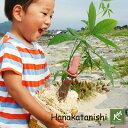 癒しの笑顔 Tree People〜木の人々〜★陽気な国からやってきた『パキーラさん』★【観葉植物 パキラ 誕生日 プレゼン…