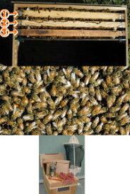 ミツバチ飼育種蜂3枚群入門キット