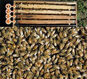 ミツバチ飼育4枚群
